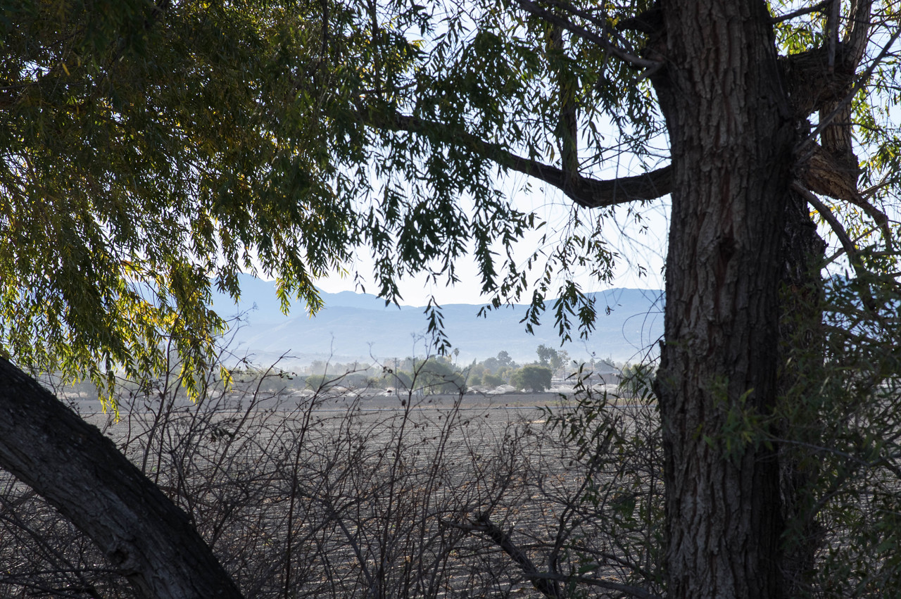 Here I'm playing with seeing what sort of image I can get by focusing on the close-by tree limbs and leaves with the farm land in the distance -- not great.