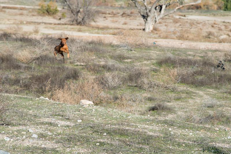 Ben startled a rabbit into running.  Unfortunately I didn't get Ben in focus in time.