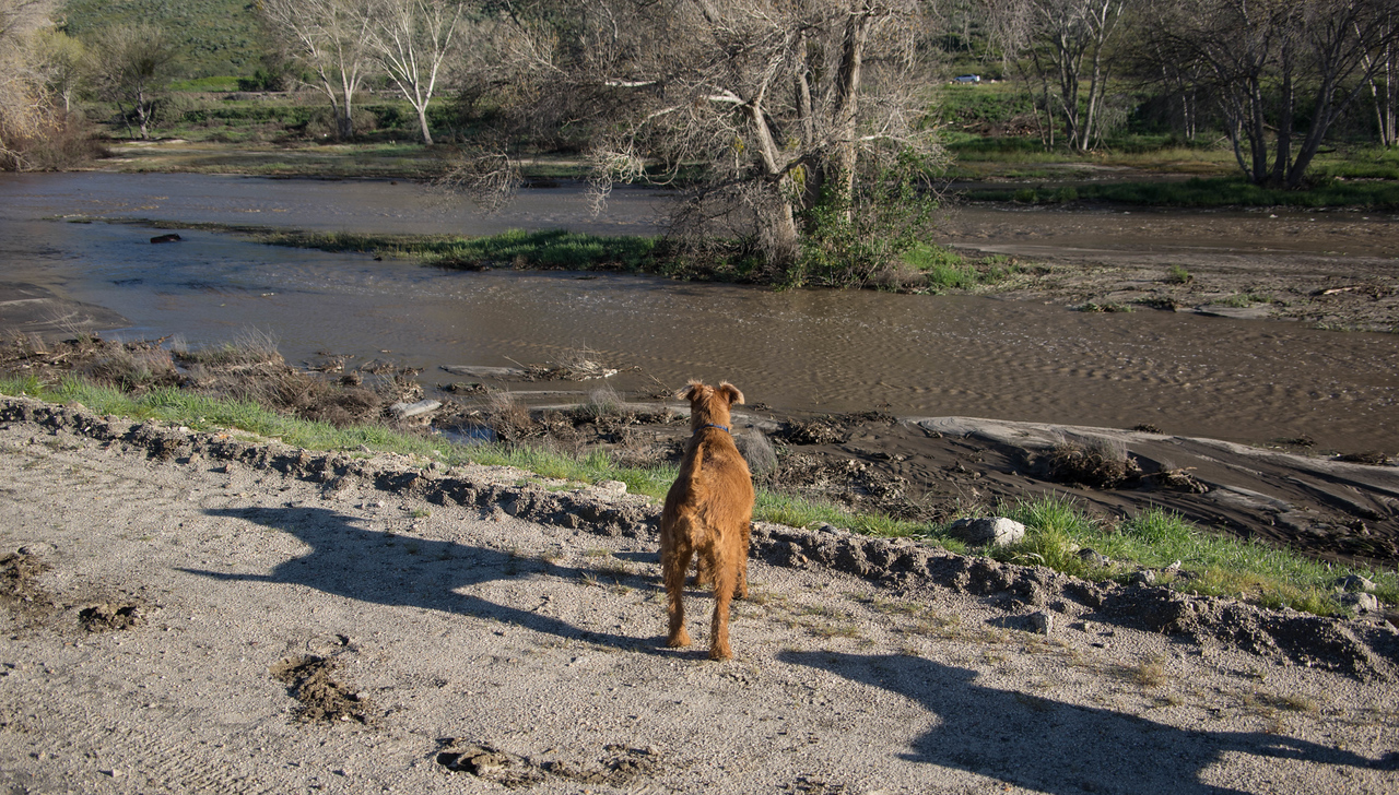 This is the first time Jessica has seen water in the river.  There hasn't been any for a few years.  I don't think Ben has seen it either, but Duffy has.
