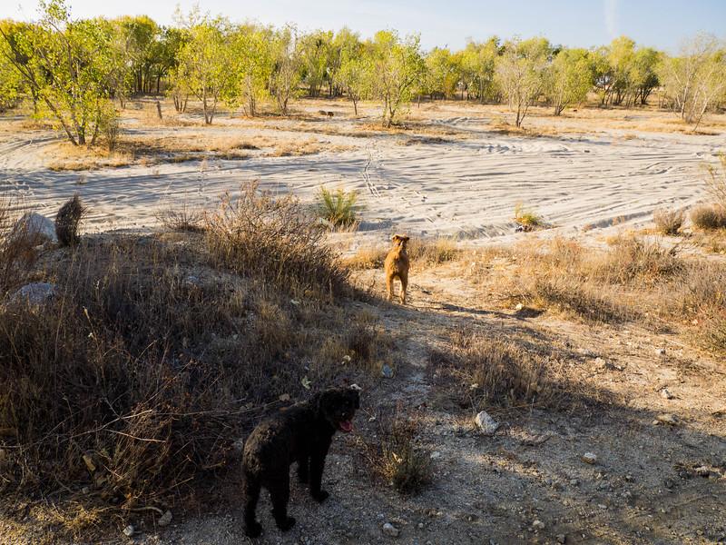Hike on 11-21-2018 using an OMD-EM1 camera and a Lumix 12-60 lens.