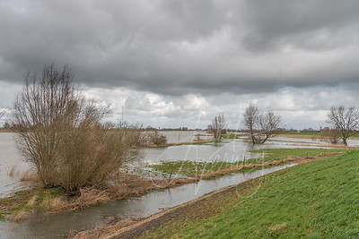 Hoog water in rivier de Lek D8135847