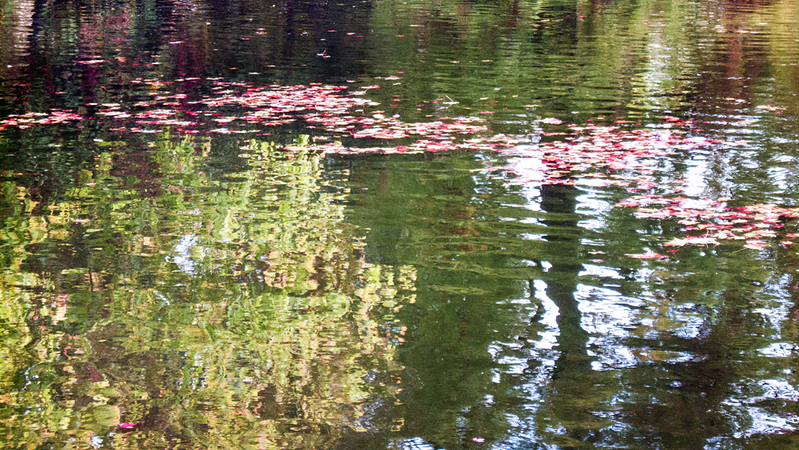 Leaves and Reflections, Jardin Public