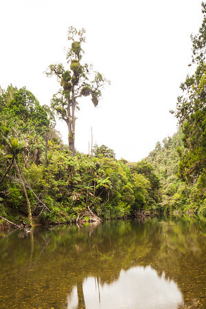 Mangapa River and native forest, Puketi Forest, Te Araroa Trail, Northland