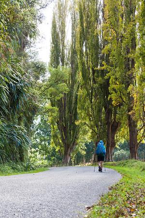 A female Te Araroa tramper road walks on Whanganui River Road, Whanganui Manawatu