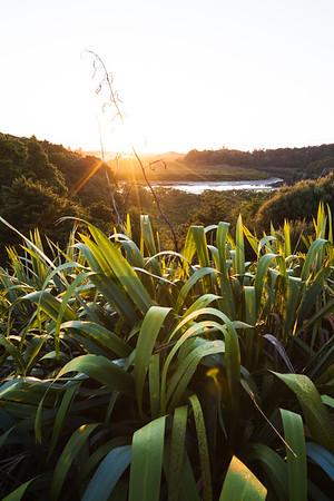 Harakeke (flax) wetland at Horahora River, Northland