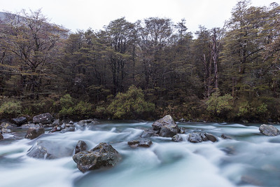 Travers River and montane beech forest, Nelson Lakes National Park
