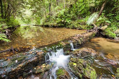 The remains of a historic timber weir, Parakauri Stream, Russell Forest, Northland