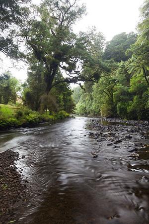 Mangaokewa River and native forest, Mangaokewa Valley, Te Kuiti