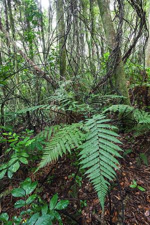 Forest interior, Kerikeri River Trail, Northland