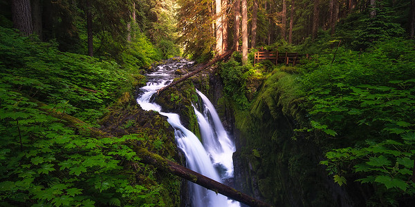 Sunlight breaks through the thick forest at Sol Duc Falls