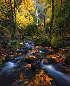 Beautiful fall colors in the Columbia River Gorge, Oregon