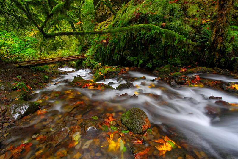 ~ Wahkeena Creek ~