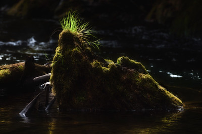 Moss covered stump on the Lyre River