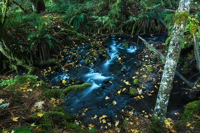 La Poel Creek, Lake Crescent, Olympic National Park