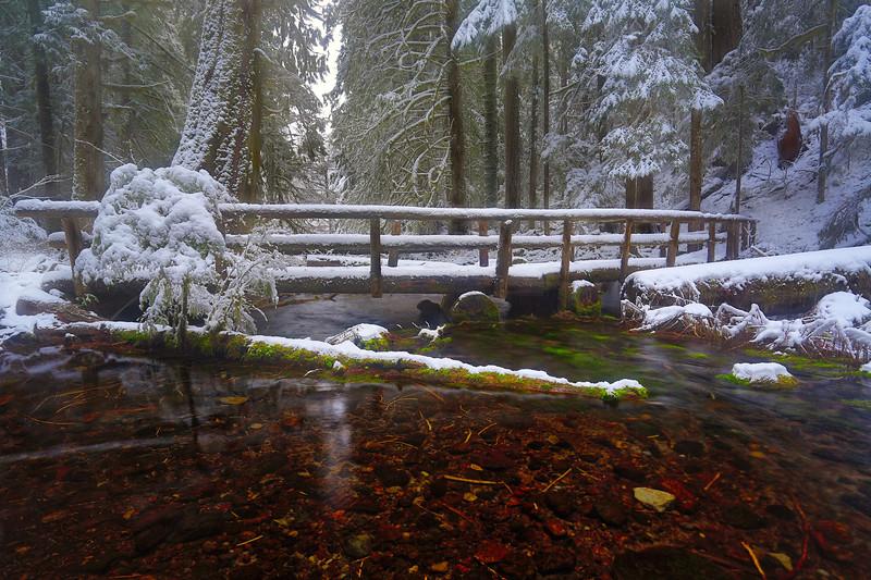 ~ McKenzie River Trail ~