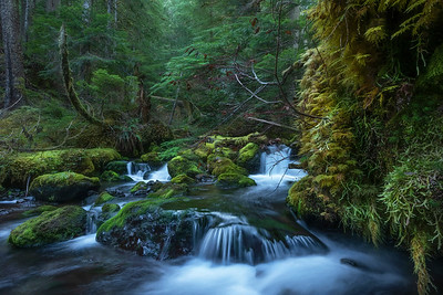 Tunnel Creek, Olympic National Forest