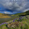 ~ Purple Palouse ~