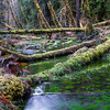 Unnamed spring channel, Hoh River, Olympic National Park