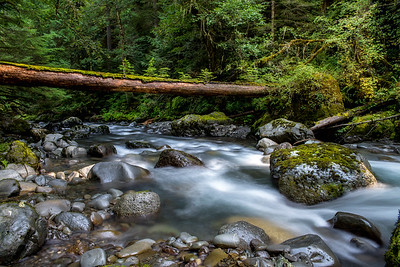 Dungeness River, Olympic National Forest, WA