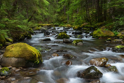 The upper Dungeness River, Olympic National Forest