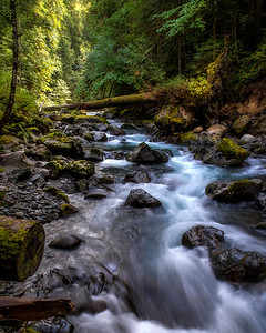 Upper Dungeness River, Olympic National Forest, WA