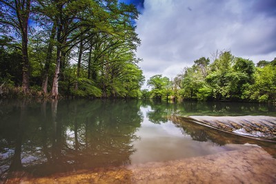Blanco River Cypress