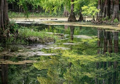 Head Waters at Peacock Springs