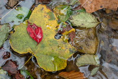 Fall River Leaves on the  Etowah River