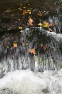 Fall Shoals  in the Etowah