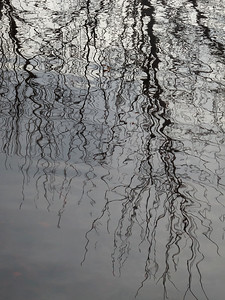 Reflections  in the Okefenokee