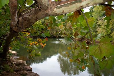 Tree on Rock Island  Etowah River