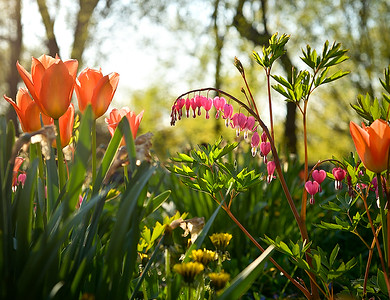 Every year, back comes Spring, with nasty little birds yapping their fool heads off and the ground all mucked up with plants.   (D. Parker)