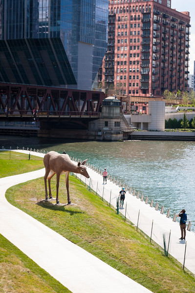 Deer public art sculpture by Tony Tasset on Chicago Riverwalk