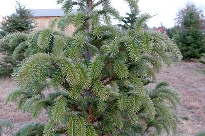 Riverwind Tree Farm