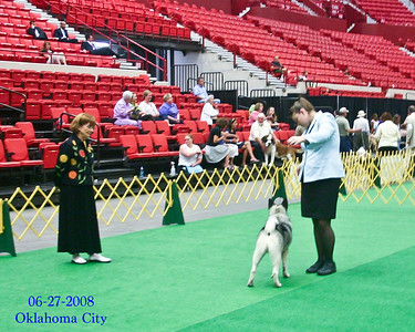 Cowboy's first time in the show ring.  We entered Cowboy for 2 out of the 4 days of shows in Oklahoma City in June, 2008.  He received First Place in his class and Reserve Winners Dog on both days.