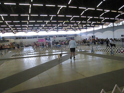 July 5, 2008 - Video - Dallas Dog Show