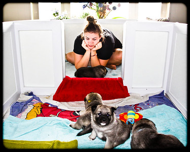2011 Angel x Rogue Pups