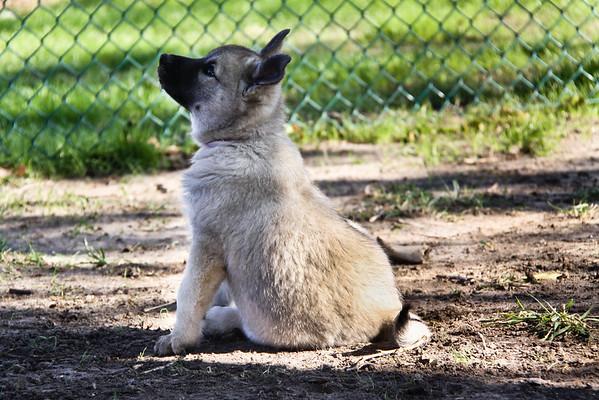 2011-10-29 Last Saturday - 10 Week Old Pups