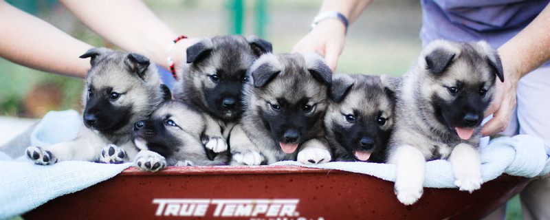 6 Pups-in-a-Row