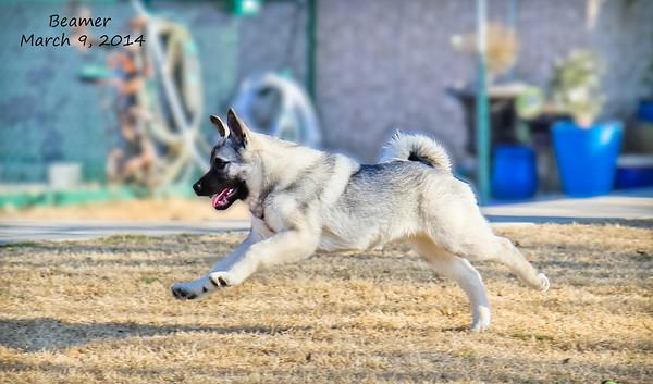 2014-03-09 Beamer Pup