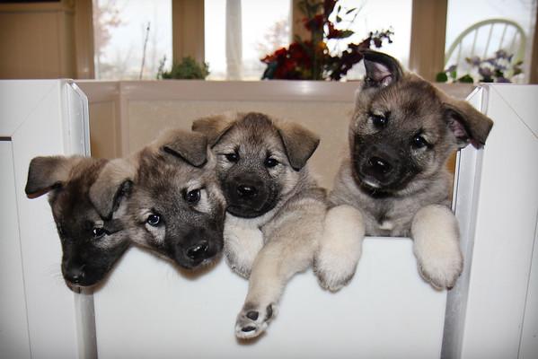 2015-02-26 Pups Inside