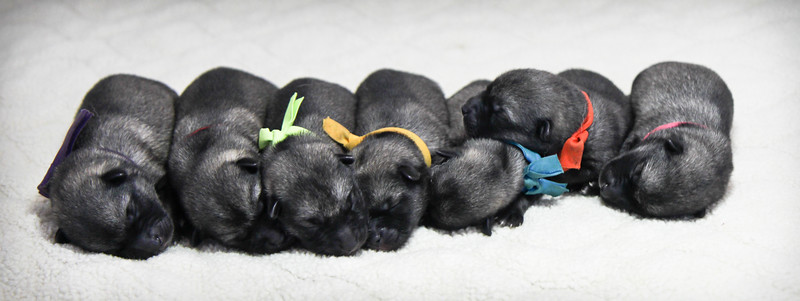 2015-07-20  4 day old pups