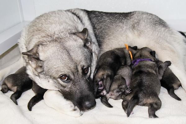 2015-07-23 1 week old puppies