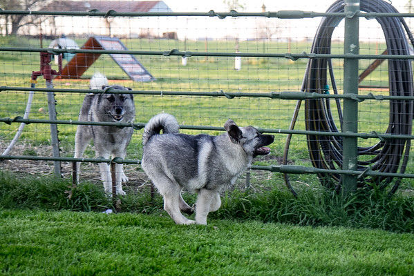2016-03-16 Priceless Puppy Pics