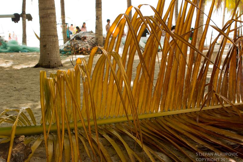 Beach Palm on Isla Mujeres