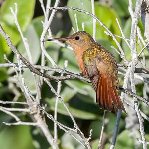 Riviera Maya Birds