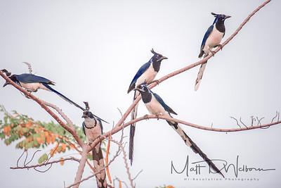 Birds of Lo de Marcos