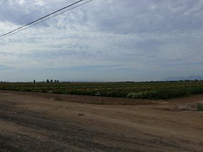 Westward from Phoenix