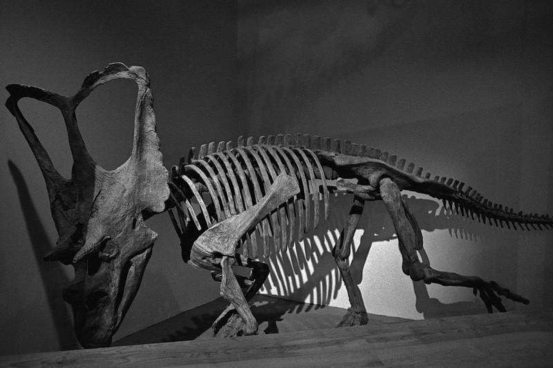 DinosaurPark_FieldStation_MC_06072009_002