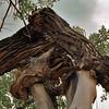 DinosaurPark_Cottonwood_MC_06072009_014